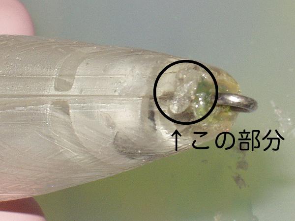 P70_tail2